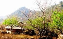 Phê duyệt quy hoạch tổng thể phát triển Khu du lịch quốc gia Mộc Châu