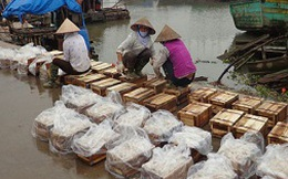 Nam Định: Hàng chục nghìn tấn sứa xuất ngoại