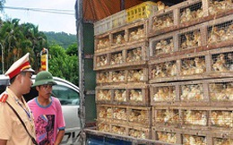 4 tháng, bắt giữ hơn 128 tấn gà nhập lậu