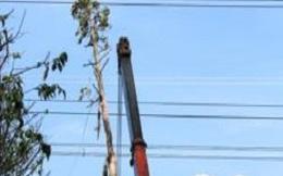 Sự cố đứt đường dây 500KV gây thiệt hại rất lớn