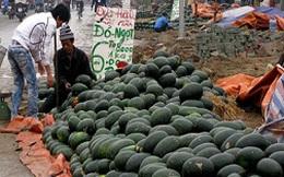 Dưa hấu bán 1.000 đồng/kg - Nông dân đắng lòng