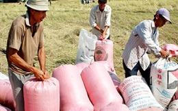 """Sẽ """"ép"""" chỉ tiêu mua tạm trữ lúa gạo cho doanh nghiệp"""