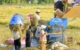 Quanh việc mua 1 triệu tấn gạo cứu nông dân