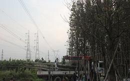 Không khắc phục sự cố điện trong 2 giờ, phạt 6-8 triệu đồng