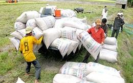 Thu hoạch và tiêu thụ lúa hè thu - Ùn ứ do mưa dầm