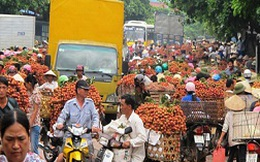 Phần lớn vải thiều ở Hà Nội chỉ là vải loại 3