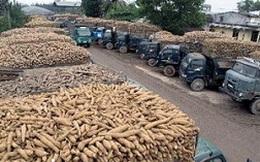Việt Nam có thể thu về 2 tỷ USD từ xuất khẩu sắn