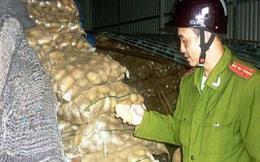 Nhập nhèm giữa khoai tây Trung Quốc và khoai tây Đà Lạt