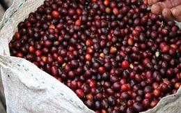 Giá rớt, xuất khẩu giảm, ngành cà phê kiến nghị mua tạm trữ