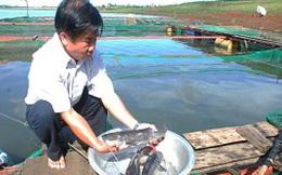 Thành tỷ phú nhờ nuôi cá lăng đuôi đỏ