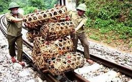 Bắt nhiều vụ vận chuyển gia cầm nhập lậu từ Trung Quốc