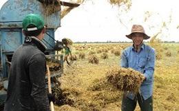 Thu mua tạm trữ lúa gạo: Chưa đủ lực kích!