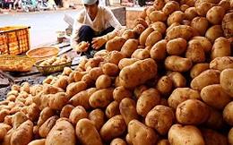 Khoai tây Trung Quốc vẫn đổ về Đà Lạt