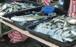 Singapore khan hiếm cá biển
