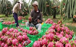 """Đi tìm """"siêu trái cây"""" Việt Nam để làm giàu"""