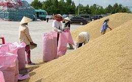 Lúa, cá tra lỗ nặng đang khiến nông dân điêu đứng
