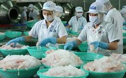 Người nuôi cá tra điêu đứng: Đổi mới để sống còn