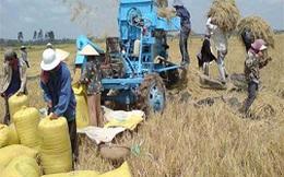 Giá gạo tăng, hàng loạt hợp đồng cung cấp gạo bị hủy
