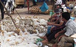 Lạng Sơn: Vịt không rõ nguồn gốc ngang nhiên bày bán