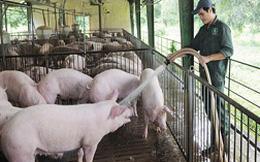 Quản lý bất cập, ngành chăn nuôi tụt hậu
