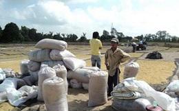 Tạm trữ lúa gạo: Vì sao cung - cầu chưa gặp?