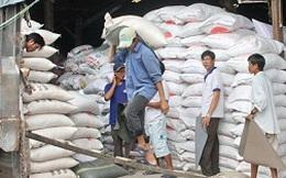 Nhiều doanh nghiệp đang chờ được cấp phép xuất khẩu gạo