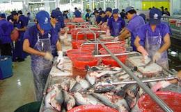 Làm gì để giải cứu cá tra?