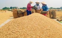 Nan giải bài toán tạm trữ lúa gạo