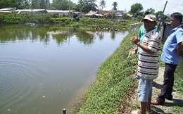 Lao đao nghề nuôi cá chẽm
