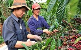 Xuất khẩu cà phê, hạt điều được gia hạn nợ
