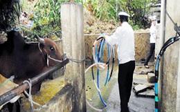 Phát hiện thủ đoạn bơm nước tăng trọng bò