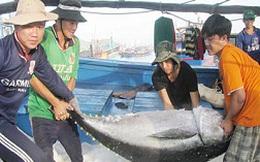 Hướng đi nào cho cá ngừ đại dương?