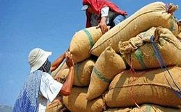 VFA kiến nghị thu mua tạm trữ thêm 300.000 tấn gạo