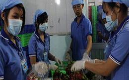 Làm ăn chụp giật, xuất khẩu rau quả gặp khó