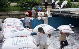 Gạo xuất khẩu liên tục giảm giá