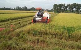Tạo độ bền cho xuất khẩu gạo