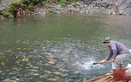 Cá hồi Sa Pa khan hiếm, giá tăng mạnh