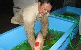 Rộng đường xuất khẩu cá cảnh