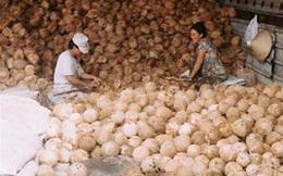 Xuất khẩu dừa khô tăng mạnh