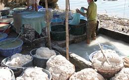 Đình chỉ hàng loạt cơ sở chế biến khoai mì gây ô nhiễm