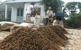 Doanh nghiệp cà phê nợ xấu 8.000 tỷ!