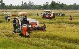 Sản lượng vụ lúa hè thu của các tỉnh phía Bắc giảm