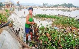 Nghệ An: Khẩn trương khôi phục vùng nuôi tôm