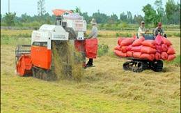 Giá gạo tăng, nông dân không được hưởng: Lỗi từ chính sách!