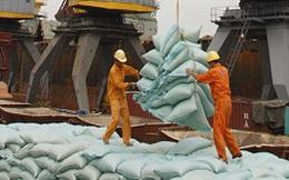 Giá phân bón nhập khẩu giảm mạnh