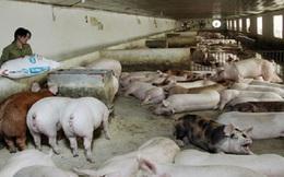Giá thực phẩm tăng: Nông dân vẫn lo thua lỗ