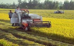 Ngành nông nghiệp Việt Nam đang đứng trước vận hội lớn