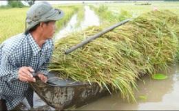 Giải pháp nào gia tăng giá trị nông sản?