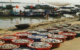 Ngư dân Khánh Hòa được mùa cá nục gai, cá sơn thóc