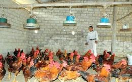 Thị trường tiêu dùng gà chuyển hướng?